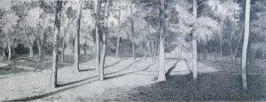 Tree-Park-14-x-5-1_2-4_20_15-c