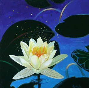water-lily3