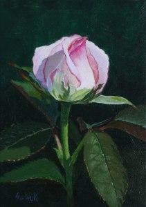 Rose-12_27_15