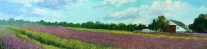 7_11_16-Lavender-Farm