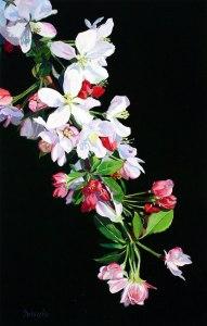 apple_flowers-2b